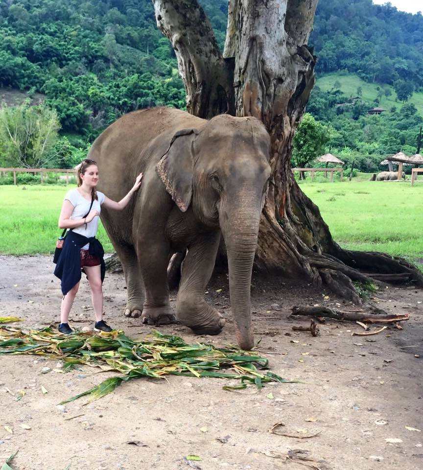 My placement to Thailand to work with the hill tribes and work with abused and neglected elephants enhanced my understanding of international ecology and broadened my understanding of foreign wildlife conservation efforts. I learnt animal husbandry and animal welfare, through spending my days with the elephants and their mahouts, this taught me that communication was key when working with such large animals, and that vigilance and care was needed when around them. It also enhanced my ability to work as a team.
